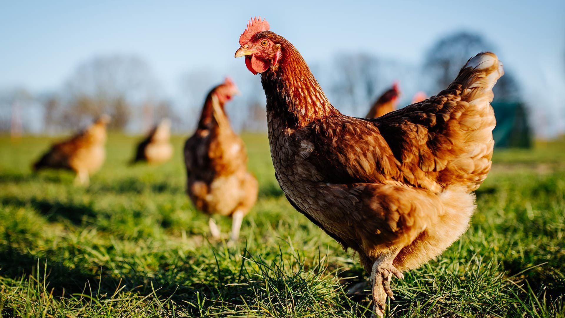 尊重动物应该成为我们重要的社会责任吗?