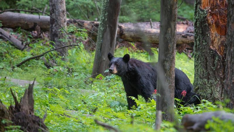 为森林发声 森林和生物多样性——无比珍贵,不容丧失